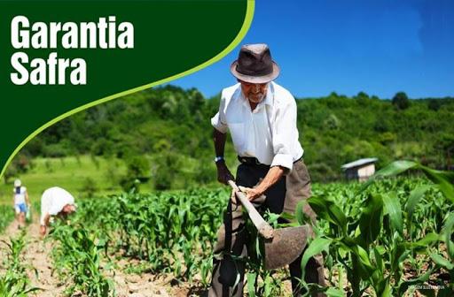 Benefício do Garantia Safra é Liberado para Agricultores Picuienses